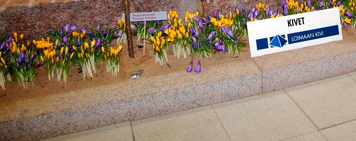 Kuulapuhallettua reunakiveä kevään 2008 Nordic Stone messuilla , jolloin pintakäsittely esiteltiin ensimmäisen kerran Suomessa.