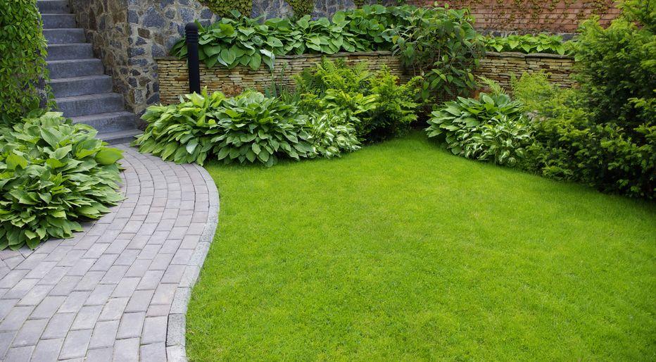 Tasainen puutarha